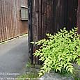 2012.05.23up alley/路地042