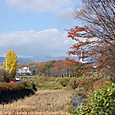 2011.12.07up Tenjingawa Green belt/天神川緑地026